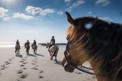 Balade sur la plage avec les chevaux Henson