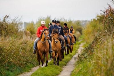 Balade avec les chevaux Henson au Haras-Henson