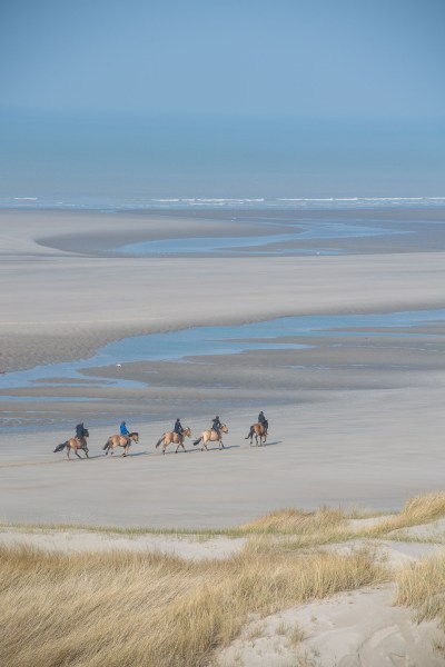 Ride with the Henson horses on the Bay of Authie beach