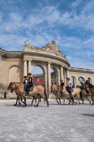 Balade avec les chevaux Henson devant le musée vivant du cheval à Chantilly