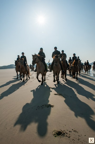Trans'Henson with the Henson horses on the Bay of Somme beaches