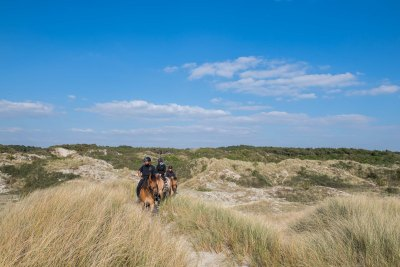 Ride with the Henson horses in the dunes of the Bay of Somme