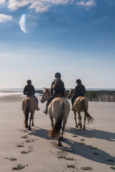 Balade avec les chevaux Henson près des bouchots à moules