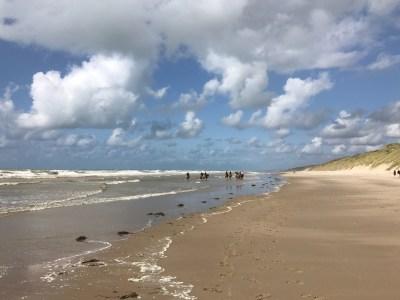 Balade avec les chevaux Henson sur les plages de la Baie de Somme
