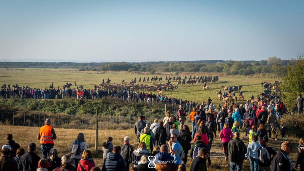 Le public venu nombreux pour assister à la Trans'Henson en Baie de Somme - © Agence Arcantide