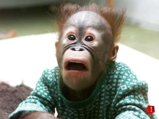 Shocked Monkey Face