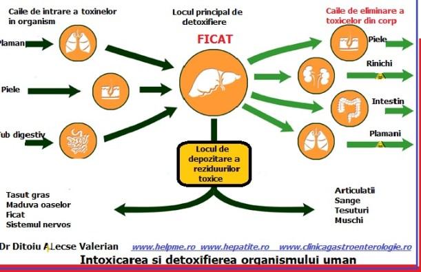 detoxifierea hepatica