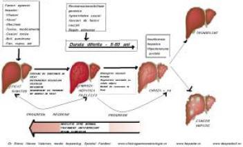 cauzele-si-evolutie-bolilor-de-ficat