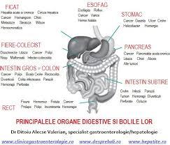 Ce este gastroenterologia