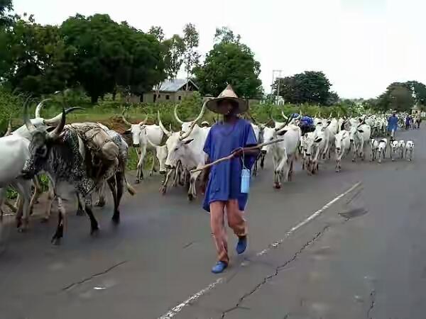 fulani-herdsmen-600x450