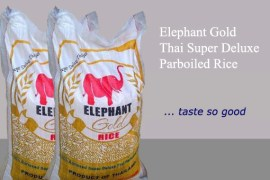 elephant_group