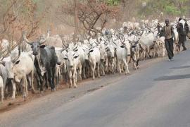 herdsmen