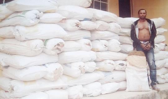 Iredia Austine With 82 Bags of marijuana