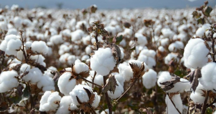 CBN to support cotton farmers in ekiti