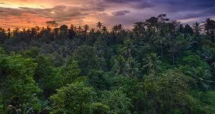 nvironmentalist treeplanting
