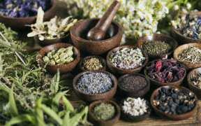 צמחים רפואה סינית