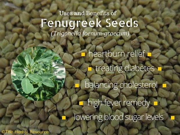 fenugreek benefits and uses