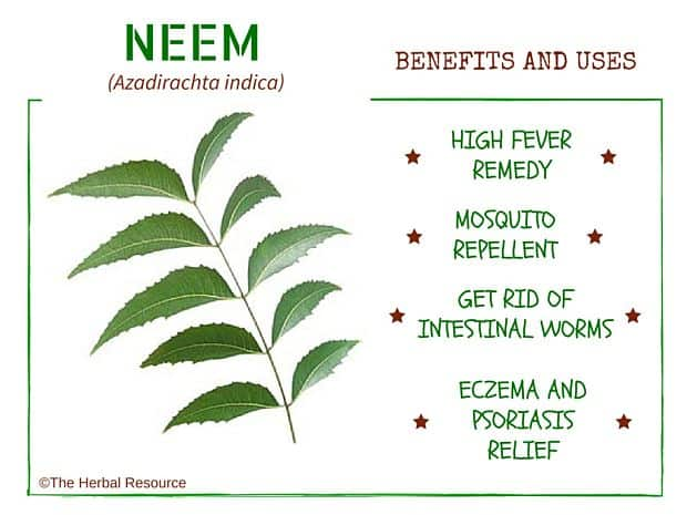 neem benefits and uses