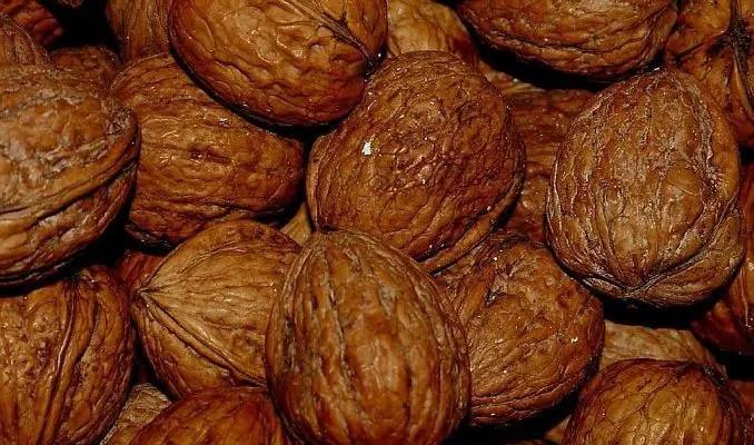 Black Walnut Uses in Herbal Medicine