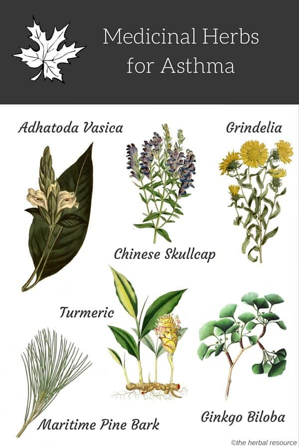 herbs for asthma