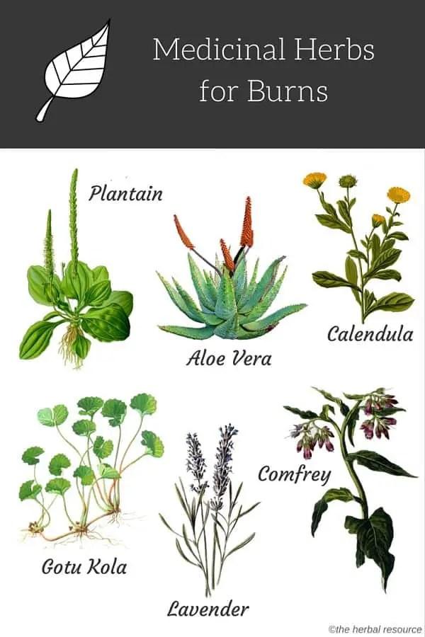 herb burns