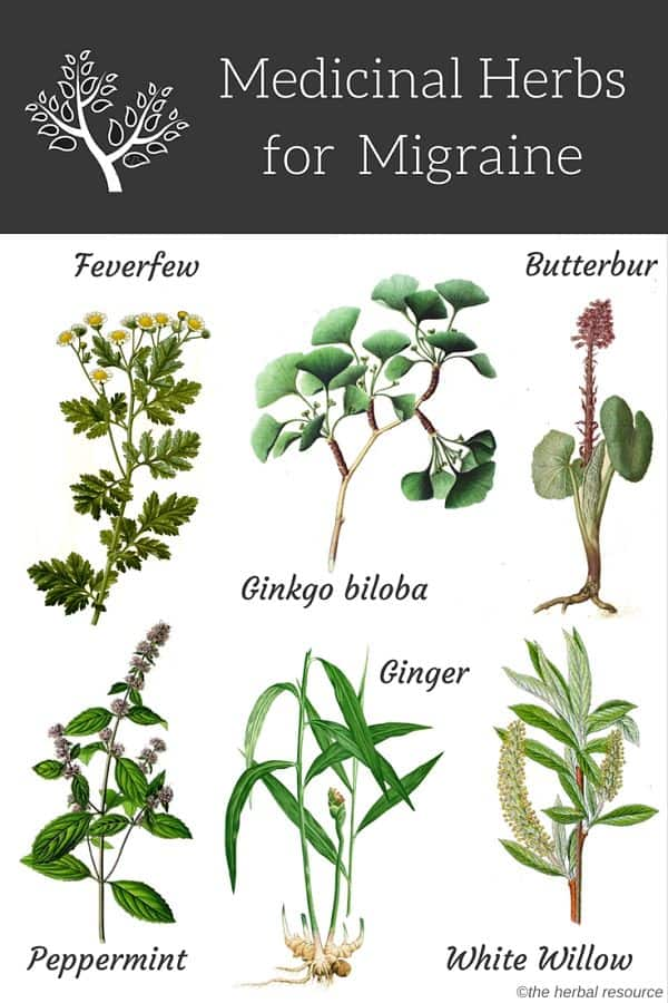 Natural Herbal Remedies For Migraines