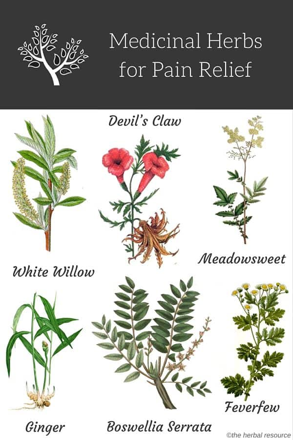 herbs for pain