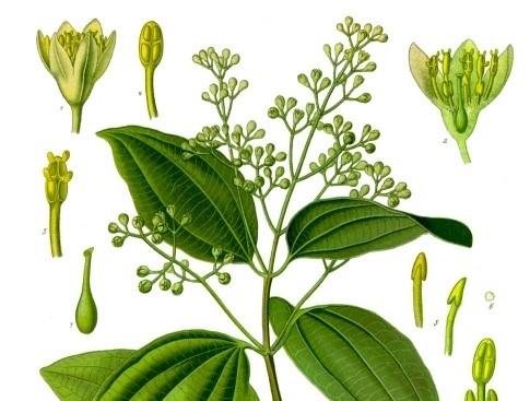 Sassafras, Cinnamon and Spicebush Metheglin