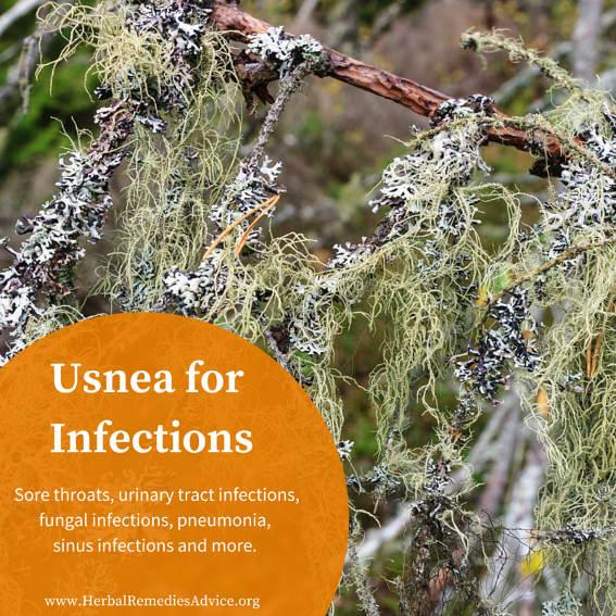 https://i1.wp.com/www.herbalremediesadvice.org/images/Usnea-herb.jpg