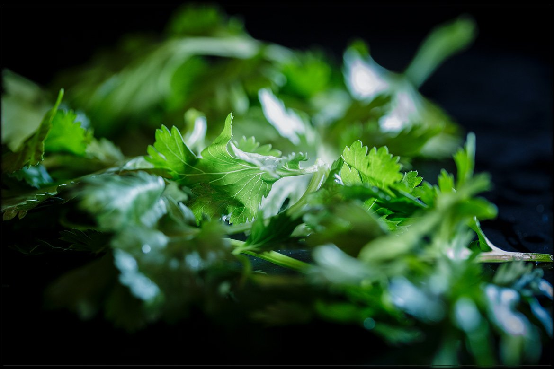ingredient: cilantro (fresh coriander) – herb&slate