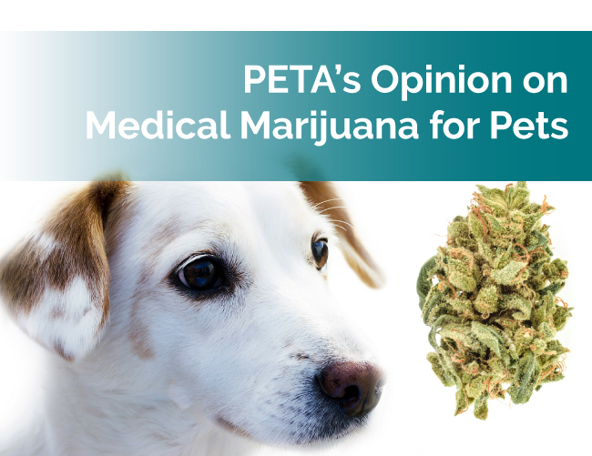 PETA and Medical Marijuana