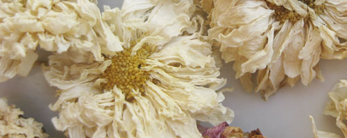 Chrysanthème (ju hua) – 菊 花