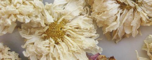 fleur de chrysantheme