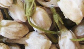 Fleur de Jasmin (mo li hua) – 茉 莉 花