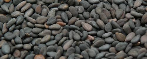 sesame noir zhi ma