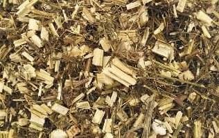 Artemisia annua (qing hao) – 青 蒿