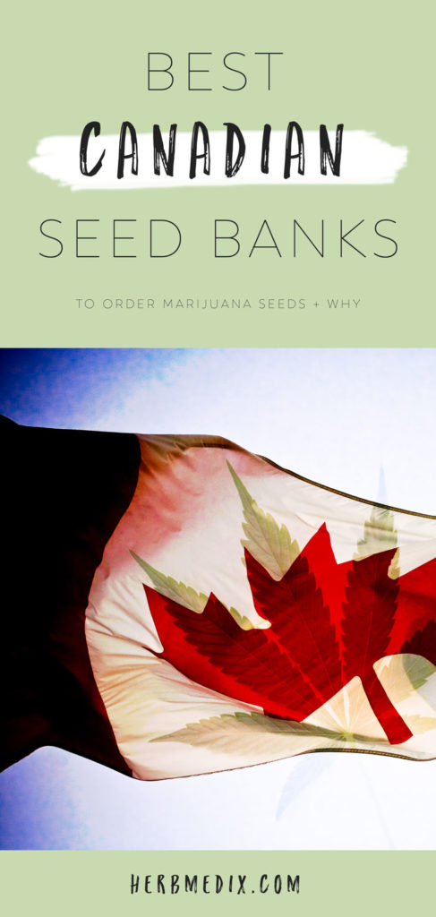 best-canadian-seed-banks-to-order-marijuana-seeds-why
