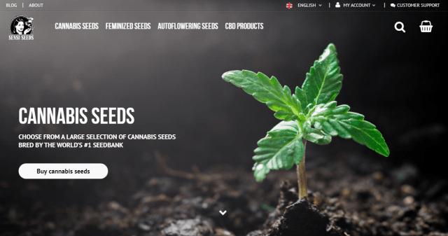 Sensiseeds HMx dutch seed banks