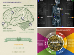 cannabis infographics best of