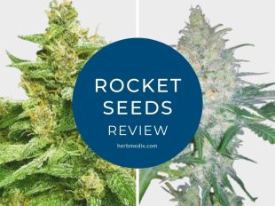 rocket seeds review