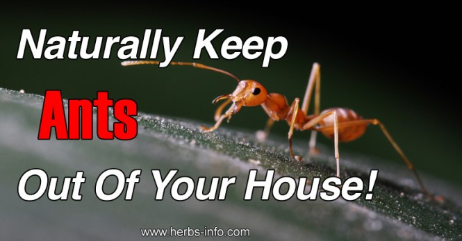 What Are Some Natural Ways To Get Rid Of Ants Without Killing Them Let S Find