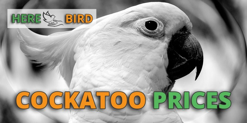 Types Of Pet Birds And Parrot Species That Make Great Pets