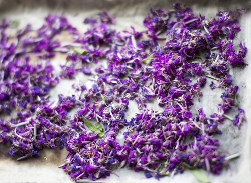 Herbal tea made from fireweed