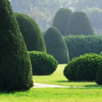 Boxwood Care: How To Identify And Treat 4 Common Pests and Diseases