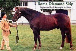 Roma Diamond Skip