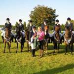 New Forest Ponies – versatile and world-beating!