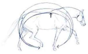 Preventing Back Pain in Horses