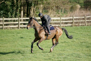 Lucy galloping Richmond