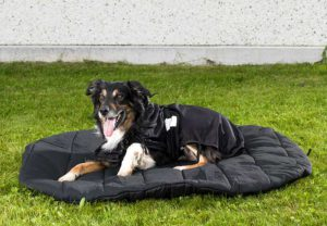 3031_Dog-Bed-oval-border-collie