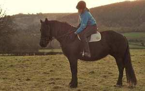 Sarah Baynham, SEBC Qualified Equine Behaviour Consultant